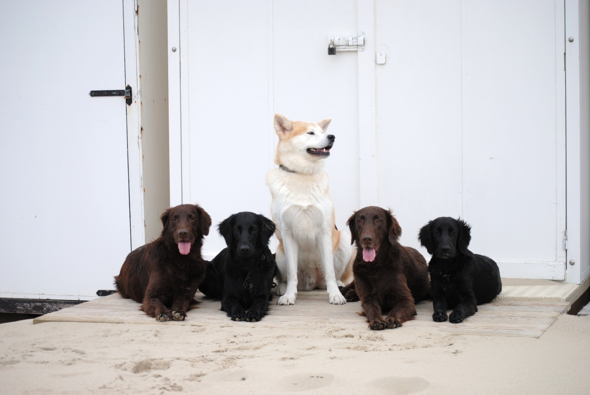 vruchtbaarste moment hond